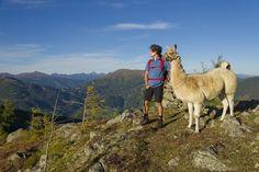 Lama trekking at  Katschberg, c Franz Gerdl Animal Photography, Husky, Inspirational Pics, Engineer, Pets, Summer, Animals, Random, Holiday