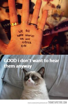 angry cat pictures with captions | December, 2012 in Funny , Pictures | Comment