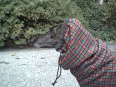Greyhound Manor Crafts Free Greyhound dog coat pattern.