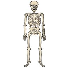 Vintage Jointed Skeleton from The Holiday Barn