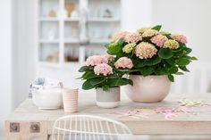42 Meilleures Images Du Tableau R Floral