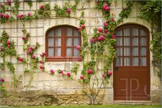 A house with beautiful flowers on the wall. Stock image by Hjalmeida. You may easily purchase this image as Guest without opening an account. Included into the 'Town house architectural details, front door' image selection. Front Door Images, Rustic Gardens, Architecture Details, Color Splash, Townhouse, Beautiful Flowers, Gazebo, Backdrops, Outdoor Structures