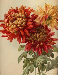 1896 calender stock 2 by rustymermaid-stock.deviantart.com
