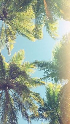 Palm Trees Wallpaper:)