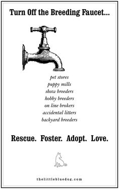Imagine if NO ONE purchased a dog for one year?  Give a shelter dog a chance, choose to adopt.  www.thelittlebluedog.com