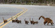 коати - Поиск в Google