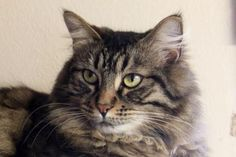 Romeo is available for adoption at the Seattle Humane Society click through for more info