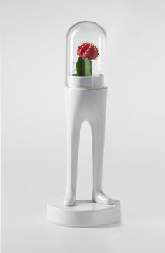 domsai kaktus terrarium weiß