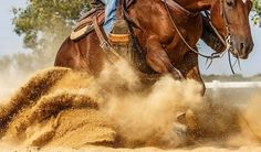 Reining Horse on the Behance Network