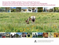AMV+photo+featured+in+Montana+Fish,+Wildlife+and+Parks+publication