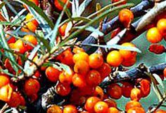 Essential Oils, Fruit, Vegetables, Vegetable Recipes, Veggies, Essential Oil Uses, Essential Oil Blends