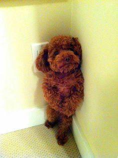 Cool Teddy Bear Chubby Adorable Dog - b92fa462d39db15e7c5edd4edfa31efa--time-out-teddy-bears  Collection_766535  .jpg