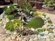 This combines two of my favorite garden elements. That is succulents and a water feature.Beautiful succulents by Shawn Haley at Flora Pacifica in Brookings Oregon