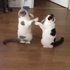 Round One... Fight!