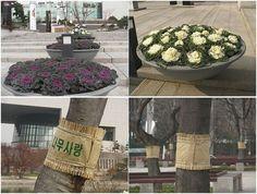 Curiosidades: flores e árvores no inverno Coreano