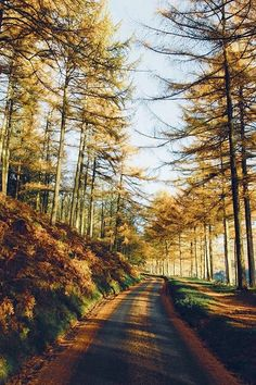 Autumn Road (no location given) by Daniel Casson / 500px