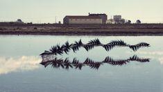 Mesmerizing Photos Capture the Flight Patterns of Birds   Black-winged stilt, Ebro delta, Catalonia   Credit: Xavi Bou   From Wired.com