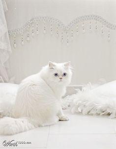 shabby cat !