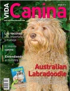 Lupe #australianlabradoodle www.criaderofrankontheroad.com Australian Labradoodle, Baseball Cards, Be Nice, Dogs