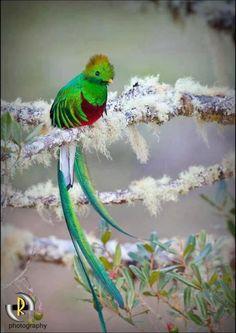 El Quetzal, foto por Enmanuel Ramirez