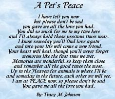 184 Best Grief And Pet Loss Images Grief All Dogs Cats