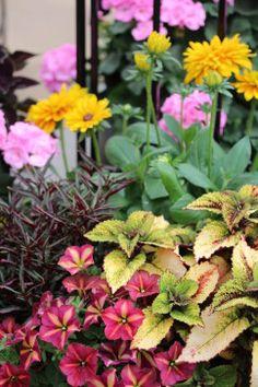 Essayes ces grandes idées pour des combinaisons de plantes qui jouent bien ensemble dans des conteneurs.