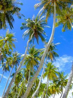 Du denkst, die Malediven beschränken sich teuren Ressorturlaub? Das muss nicht sein. Die Trauminseln kann man auch ganz anders erleben.