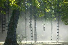 Ladders tree