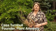 How to Prune Magnolias - Instructional Video w/ Plant Amnesty