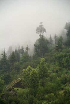 A beautiful foggy scene in the Smoky Mountains
