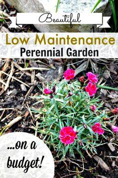 How to Grow a Low-Maintenance Perennial Garden on a Budget!