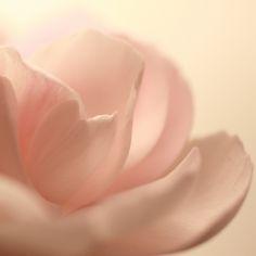peach on #peach #flower