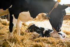 Dairy Farming and Dairy Sustainability | Where Good Comes From