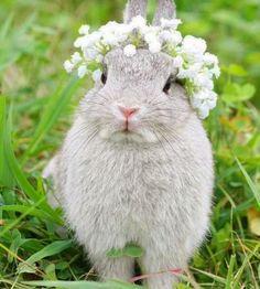 Bunny looks like a little princess!