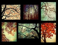 Tree Photography autumn leaves Forest For The Trees autumn trees splendor woodland naturalist hiking decor set of 7 57 55 photos Picture Tree, Photo Tree, Montage Art, Photo Montage, Autumn Trees, Autumn Leaves, Tree Photography, Photography Collage, School Photography