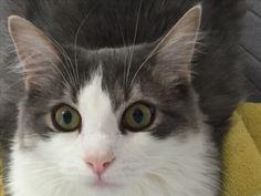 Animals, Cat Breeds, Animales, Animaux, Animal, Animais