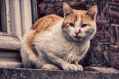 Cat Belgium   Flickr - Photo Sharing!