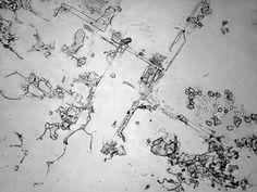 Vi propongo alcuni stralci di un progetto artistico ad opera della fotografa Rose-Lynn Fisher, che ha osservato al microscopio lacrime di vario tipo e provenienza, dimostrando che esse, come i fiocchi di neve e le impronte digitali, sono molto diverse l'una dall'altra.