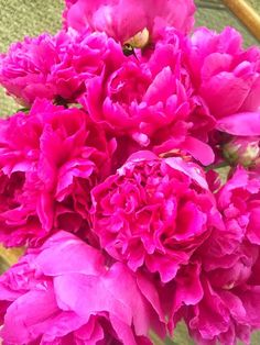 the pink clutch ...: Peonies!!