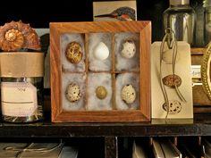 Nested Bird Egg Specimen Display Case - Wunderkammer - Cabinet Of Curiosities