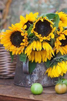 ♔ Sunflowers