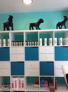 Grooming salon front entry doggie dos pinterest front entry repinned interior pet grooming salon solutioingenieria Choice Image