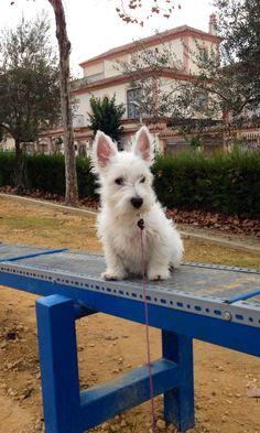 #Audrey en el parque agility
