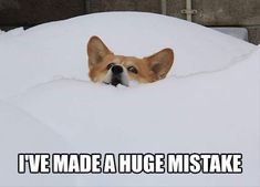 Are you bored? Then you need to see these Corgis losing it, even if it was just for a tiny moment. #corgi, #funny