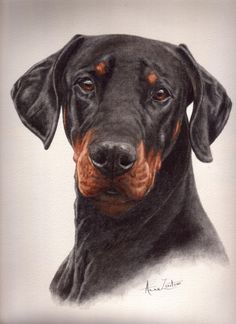 Painting of a Dobermann by Anne Zoutsos