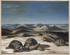 """Drie schildpadden (Three Tortoises)"", 1952 / Carel Willink (1900-1983) / Centraal Museum, Utrecht, The Netherlands"