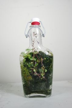 we create objects of wilderness. one of a kind artisan terrariums of local plants and moss inside repurposed found and heirloom glass vessels. every living sculpture is imagined and created by Jose 'Jojo' Agatep. Bottle Terrarium, Terrarium Plants, Indoor Garden, Garden Art, Indoor Plants, Little Gardens, Mini Gardens, Miniature Gardens, Fairy Gardens