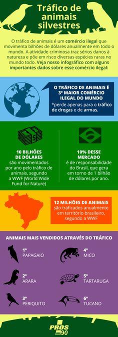 Infográfico sobre o tráfico de animais silvestres.