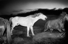 Trent Parke (Minutes to Midnight) Harts Ranges after the rodeo, Northern Territory, Australia 2004