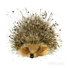 Hedgehog Illustration with Splash Watercolor Textured Background Poster by Dabrynina Alena at AllPosters.com